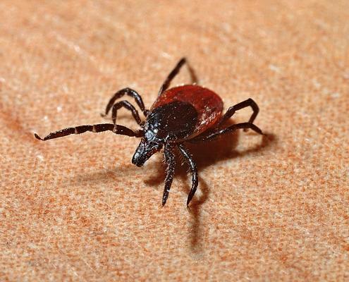 when to spray for ticks